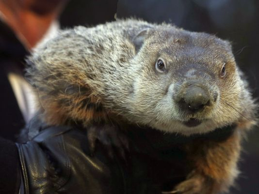Groundhog Day 2016: Punxsutawney Phil Doesn't See His Shadow