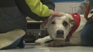 MI lawmakers to vote on animal bills