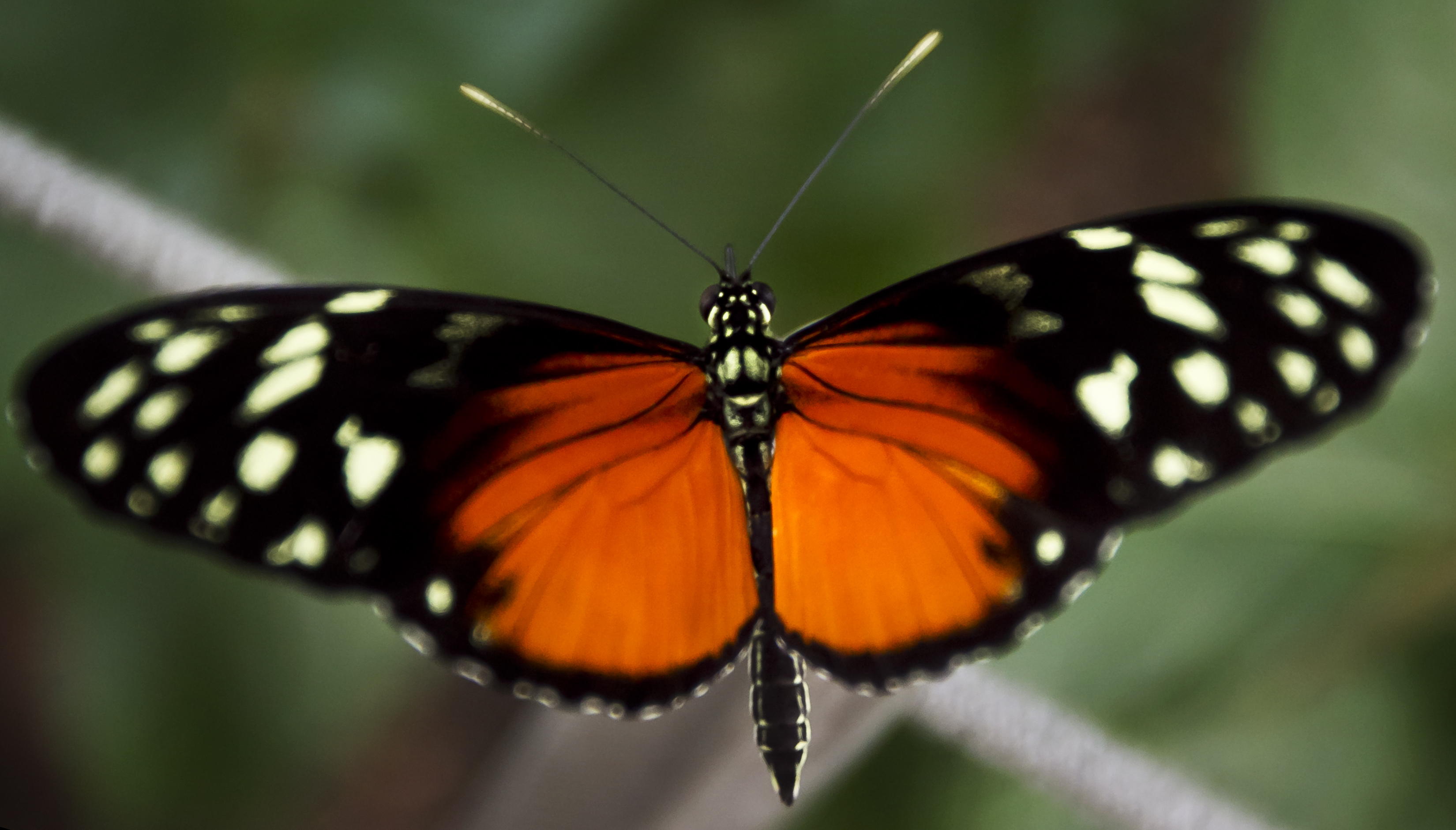 Frederik Meijer Gardens Butterflies In Bloom Exhibit Opens This Week
